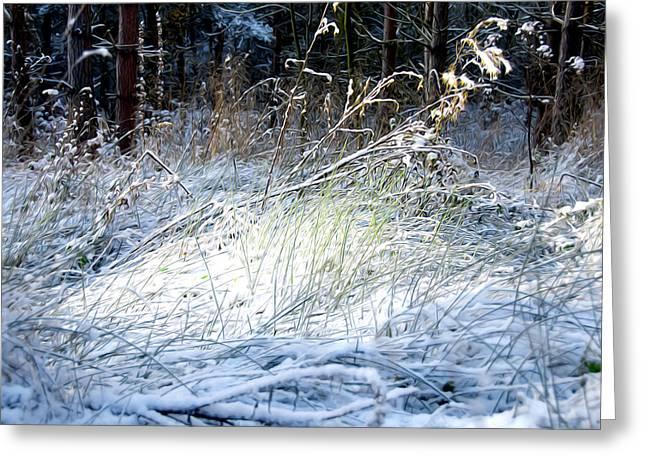 Seaside Digital Art Greeting Cards - Frozen Grass Greeting Card by Svetlana Sewell
