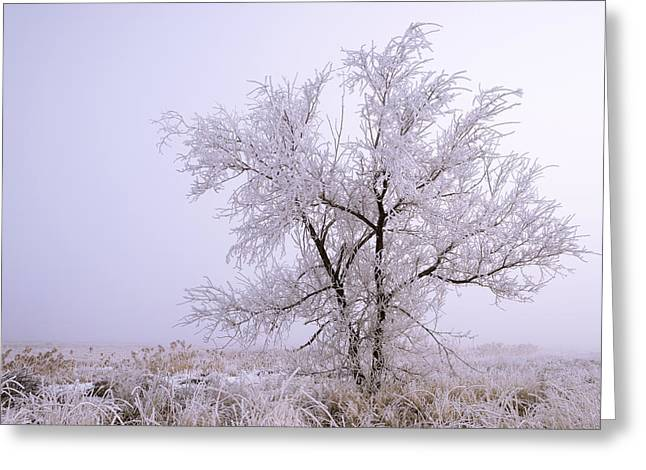 Frozen Ground Greeting Card by Chad Dutson