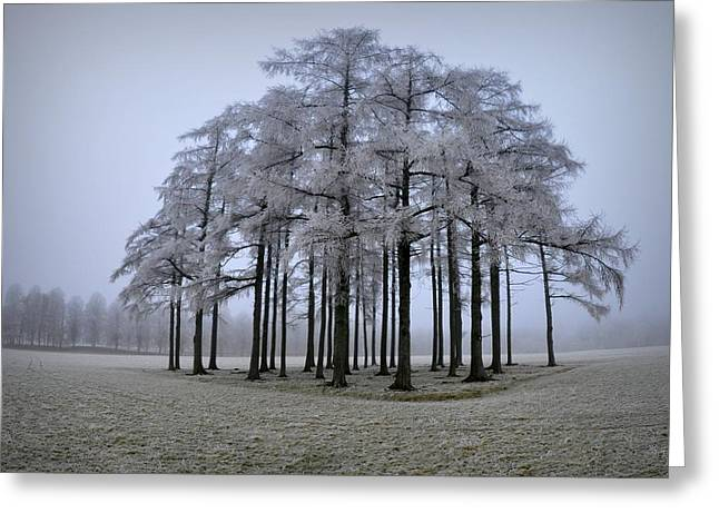 Frost Greeting Cards - Frozen Oasis Greeting Card by Peter Mlynarcik