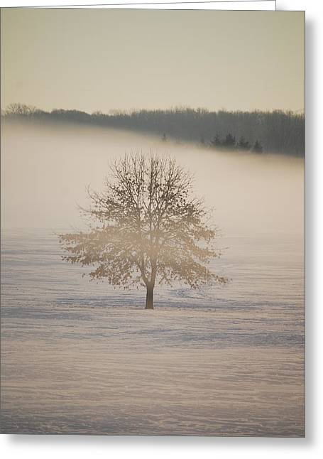 Ice Fog Greeting Cards - Frozen  Greeting Card by Peter  McIntosh