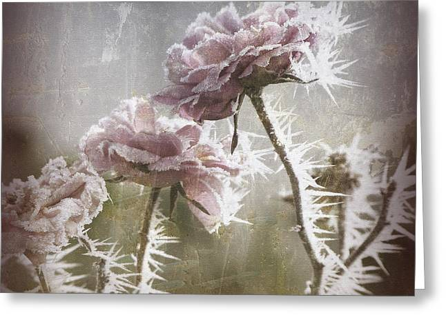 Dusky Pink Greeting Cards - Frozen Roses Greeting Card by Bonnie Bruno