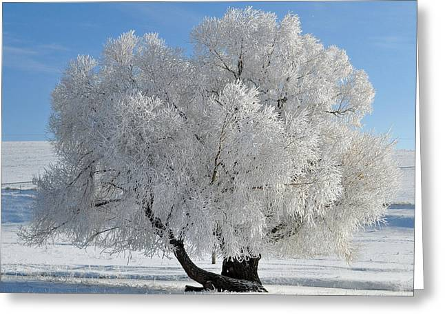 Frozen Tree Greeting Card by Bruce Gourley