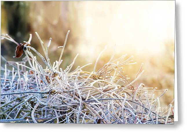 Close Focus Nature Scene Greeting Cards - Frozen twig branch in winter Greeting Card by Gregory DUBUS