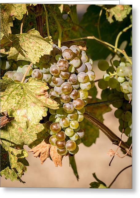 Grape Vineyard Greeting Cards - Fruit of Labour  Greeting Card by Sabine Edrissi