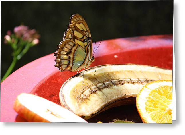 Banana Flower Greeting Cards - Fruit of the Spirit Greeting Card by Karen M Scovill