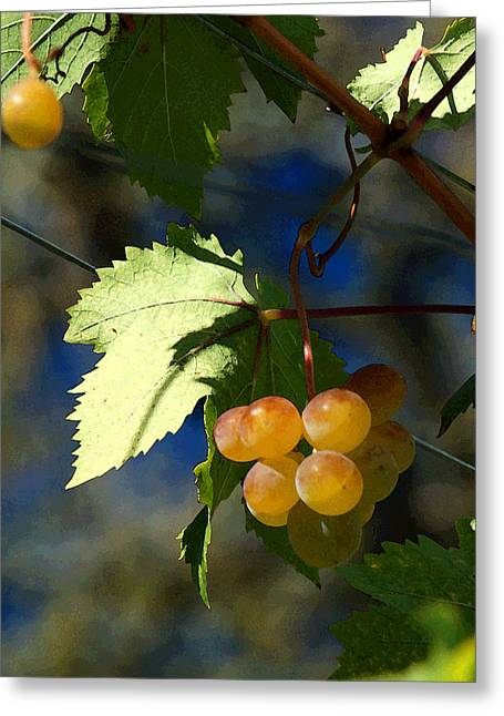 Blue Grapes Greeting Cards - Fruit of the Vine Greeting Card by Suzanne Gaff