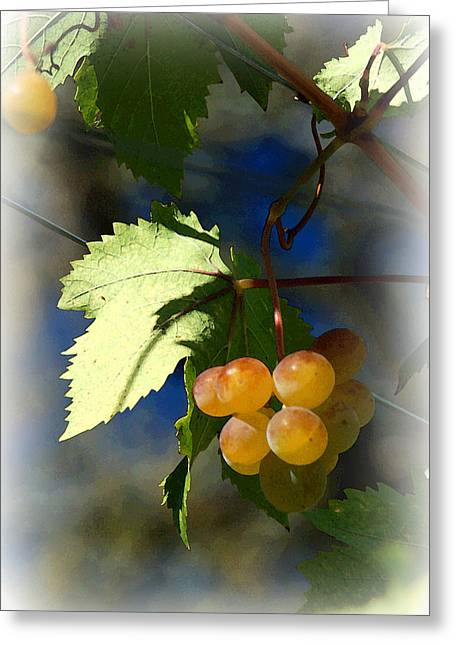 Grape Leaves Digital Greeting Cards - Fruit of the Vine Vignetted Greeting Card by Suzanne Gaff