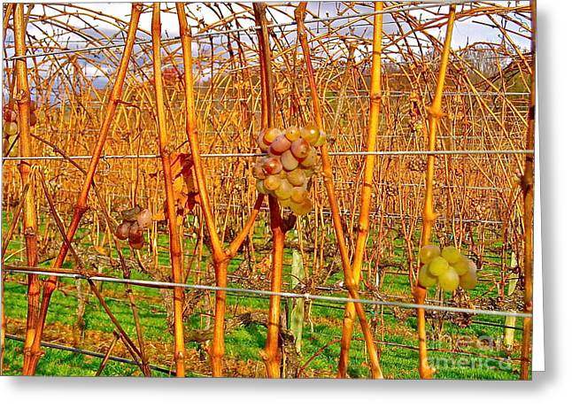Grapes On Vine Greeting Cards - Fruit on the Vine Greeting Card by E Robert Dee