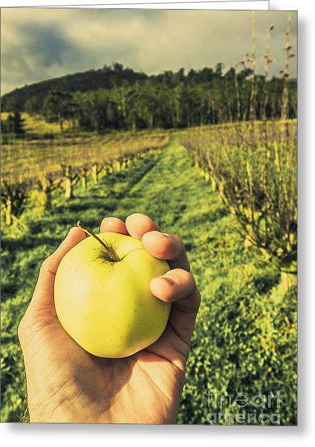 Fruits Of Labour Greeting Card by Jorgo Photography - Wall Art Gallery