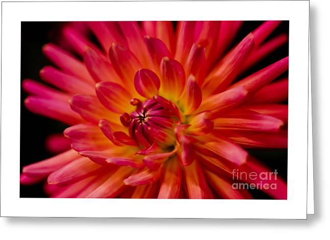 Bloosom Greeting Cards - Tutti Frutti Greeting Card by Nick  Boren