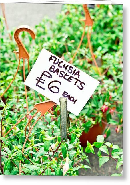 Fuchsia Baskets Greeting Card by Tom Gowanlock