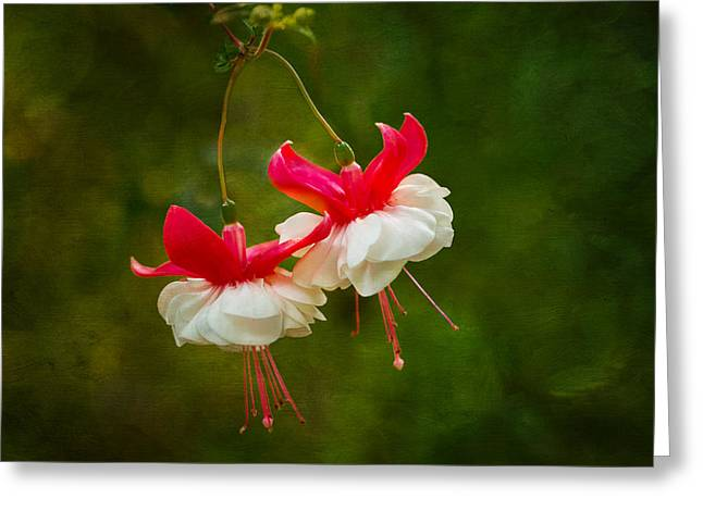 Floral Digital Art Digital Art Greeting Cards - Fuchsia Dance Greeting Card by Mary Jo Allen