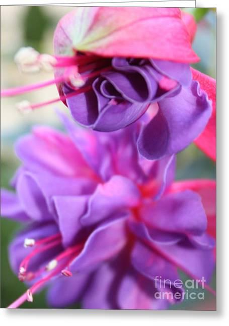 Carol Groenen Greeting Cards - Fuchsia Drama Greeting Card by Carol Groenen