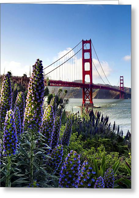 Golden Greeting Cards - Full Bloom Golden Gate Greeting Card by Sean Davey