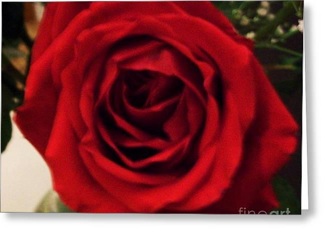 Full Bloom Greeting Cards - Full Bloom Greeting Card by Marsha Heiken