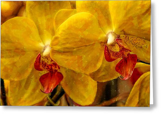 Full Frame Yellow  Orchids  Greeting Card by Geraldine Scull