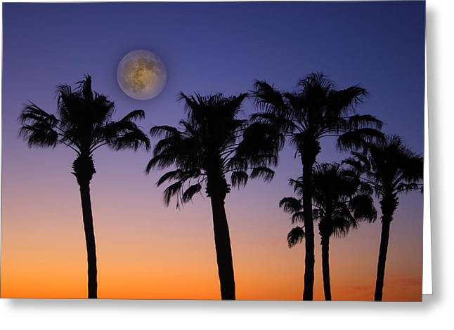 Palm Tree Greeting Cards Greeting Cards - Full Moon Palm Tree Sunset Greeting Card by James BO  Insogna
