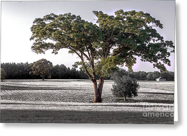 Shadows Tapestries - Textiles Greeting Cards - Full Tree Greeting Card by James Hennis
