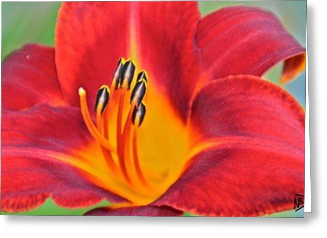 Nature Center Greeting Cards - Fun Flower 1 Greeting Card by Nicole Dumond-Barry