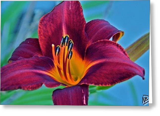 Nature Center Greeting Cards - Fun Flower 2 Greeting Card by Nicole Dumond-Barry