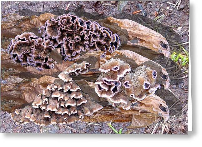 Fungi Greeting Cards - Fun Guy Greeting Card by Ron Bissett