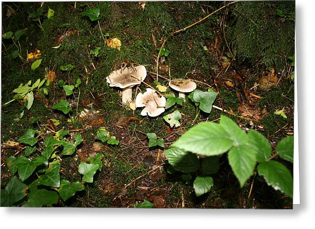 Forest Floor Greeting Cards - Fungi Greeting Card by John Quinn