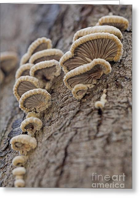 Microbiology Greeting Cards - Fungui growing on a tree trunk Greeting Card by Alon Meir