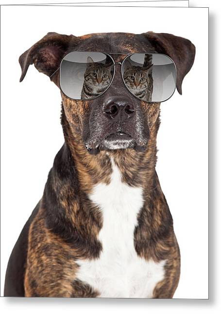 Headshot Greeting Cards - Funny Dog With Cat Reflection in Sunglasses Greeting Card by Susan  Schmitz