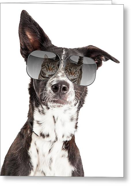 Australian Shepherd Greeting Cards - Funny Dog With Reflection of Cat in Sunglasses Greeting Card by Susan  Schmitz