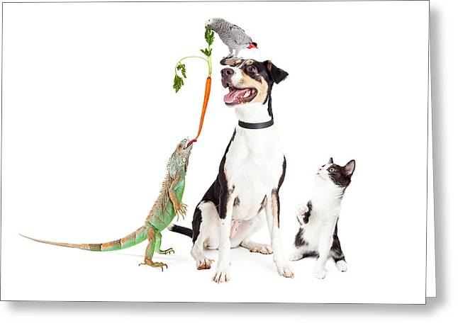 Funny Domestic Pets Interacting Together Greeting Card by Susan Schmitz