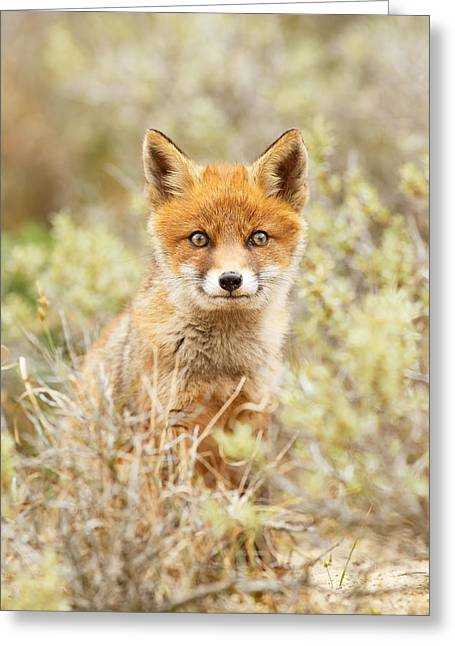 Funny Face Fox Greeting Card by Roeselien Raimond