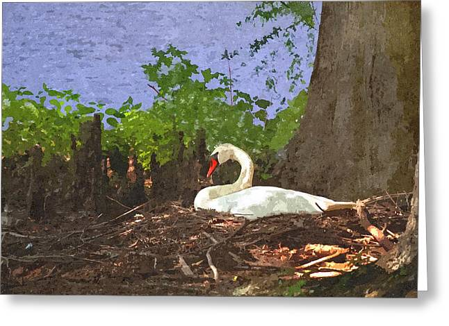 Lake Greeting Cards - Furman University Swan Greeting Card by Gary Adkins