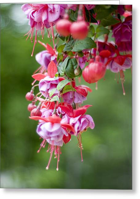 Fuschia Greeting Card by Rockstar Artworks