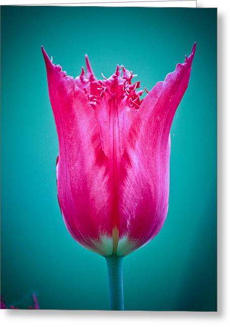 Fushia Greeting Card by Monica Lopez