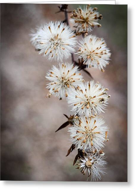 Amy Turner Greeting Cards - Fuzzies Greeting Card by Amy Turner