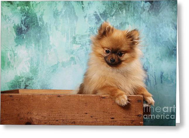 Puppies Digital Greeting Cards - Fuzzy Dog Greeting Card by Angel McCoy