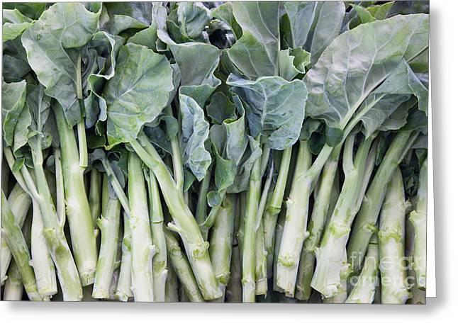 Broccoli Greeting Cards - Gai Lan, Chinese Vegetable Greeting Card by Inga Spence