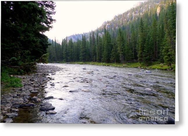 Gallatin River Greeting Cards - Gallatin River Montana Greeting Card by Kay Novy