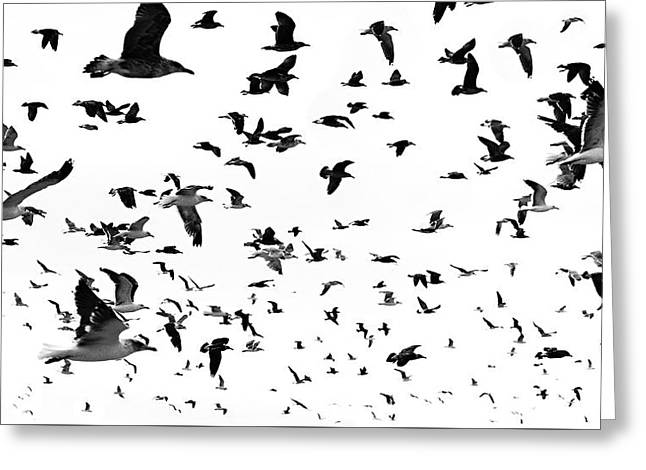 Flying Seagull Greeting Cards - Gang Greeting Card by Joao Bizarro