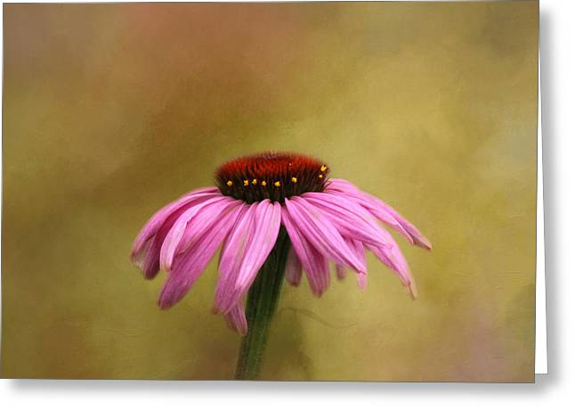 Cone Flowers Greeting Cards - Garden Bliss Greeting Card by Kim Hojnacki
