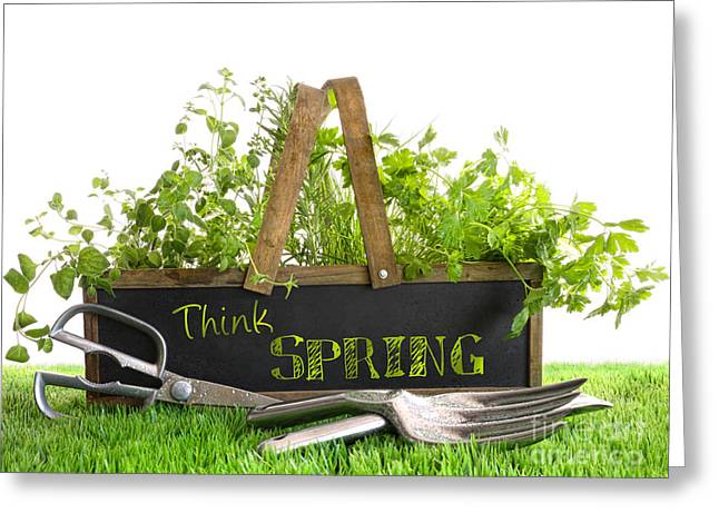Development Greeting Cards - Garden box with assortment of herbs and tools Greeting Card by Sandra Cunningham