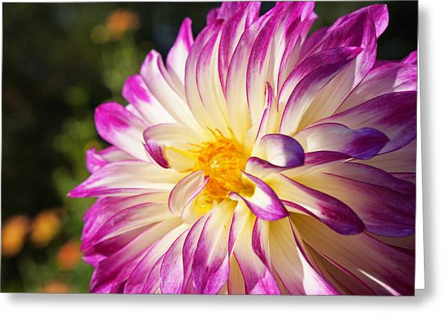 Garden Dahlia Flower Fine Art Prints Greeting Card by Baslee Troutman Garden Art Prints