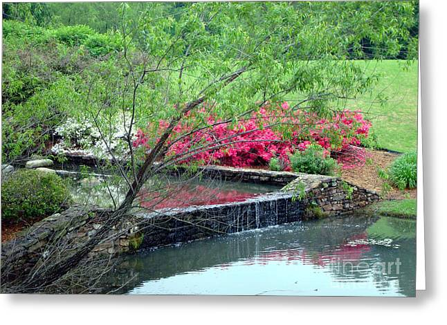 Little Rock Arkansas Greeting Cards - Garden Delight Greeting Card by Kathy Bucari