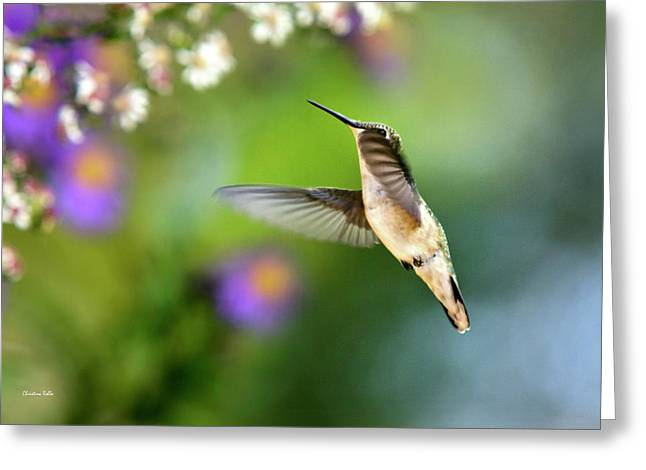 Hovering Greeting Cards - Garden Hummingbird Greeting Card by Christina Rollo
