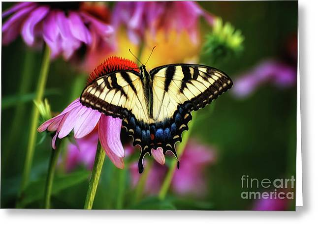 Butterfly On Flower Greeting Cards - Garden Jewelry Greeting Card by Lois Bryan