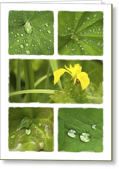 Mchugh Greeting Cards - Garden Jewels II Greeting Card by Malc McHugh