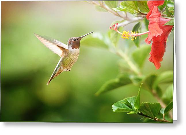 Hovering Greeting Cards - Garden Jewels Greeting Card by Lynn Bauer
