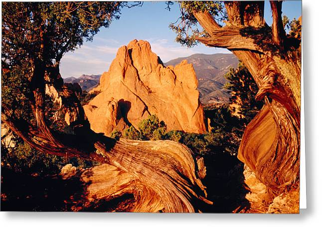 Cedar Tree Greeting Cards - Garden Of The Gods Co Usa Greeting Card by Panoramic Images