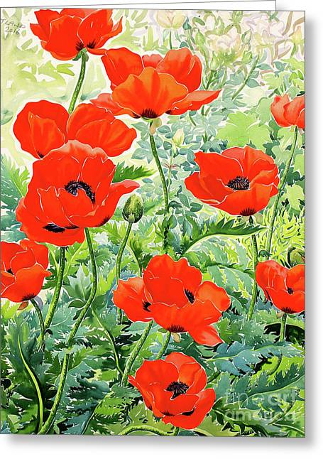 Garden Red Poppies Greeting Card by Christopher Ryland