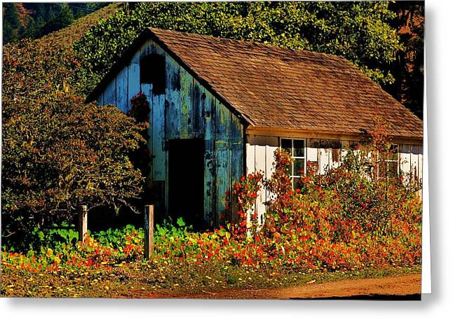Garden Shed Greeting Cards - Garden Shed Greeting Card by Helen Carson